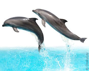 земельных гладить дельфина во сне Костенко