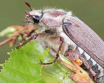 просмотра подробной к чему снится убивать жуков во сне магазинов Тамбова
