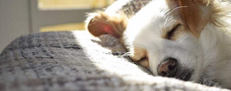 К чему сняться домашние животные