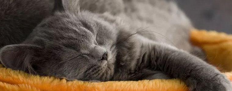 Когда стоит опасаться снов с домашними животными?