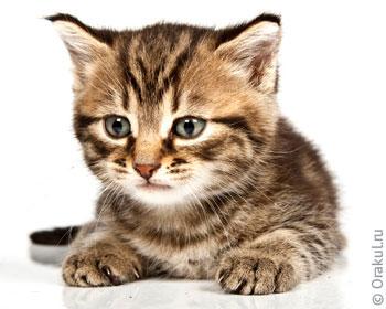 Кошка родила по соннику