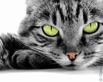 рыжий Кот по соннику