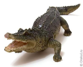 Что означает плавать с крокодилами во сне?