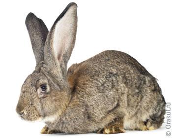 сонник убивать кролика