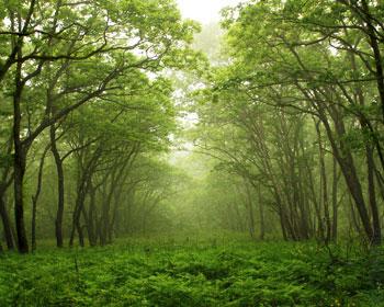 И дикие звери гуляют в лесу а мы занимаемся сексом