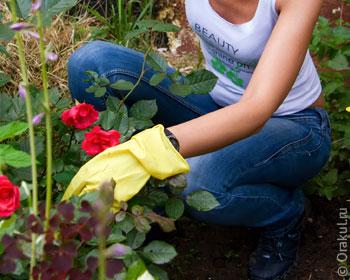 Сон о том, что вы поливаете цветы принято характеризовать как позитивный.