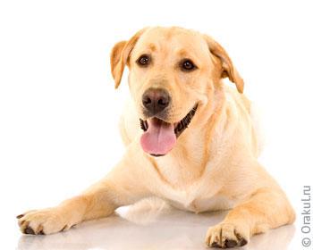 Сонник Собака к чему снится, приснилась Собака во сне?