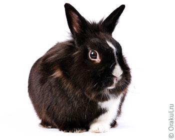 Приснился белый кролик толкуем по популярным сонникам