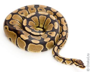 Что значит когда снятся змеи разных видов