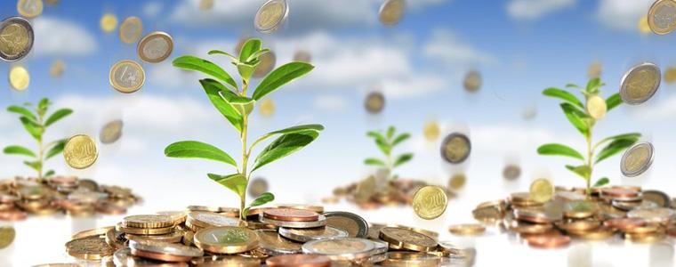 Растения-талисманы для привлечения денег